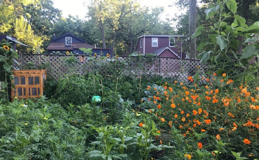 Summer 2020 Garden